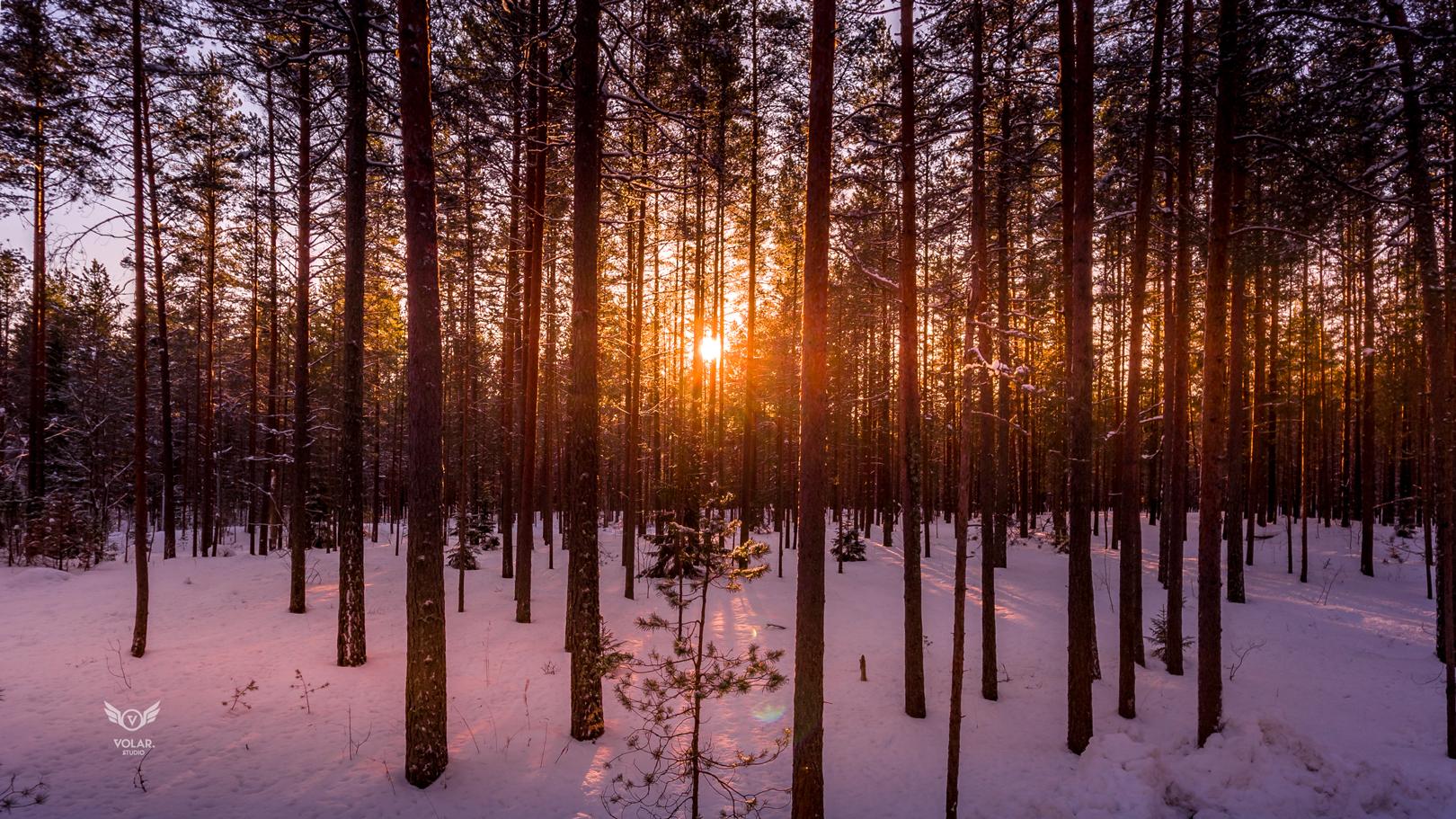 Armastus, mets